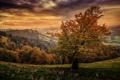 Картинка осень, лес, трава, горы, дерево, поля, обработка