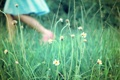 Картинка green, dream, happy, flower, nature, mood, fun