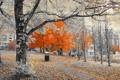 Картинка улица, город, деревья, дома