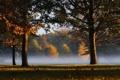 Картинка листья, трава, деревья, туман