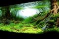 Картинка трава, вода, рыба, корни дерева, дно озера