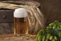 Картинка пена, стакан, пиво, колосья, бочонок, хмель