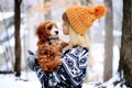 Картинка зима, шапка, девушка, животное, собака