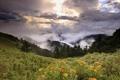 Картинка трава, облака, холмы, высота