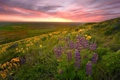 Картинка весна, фото, природа, поле, красота, цветы