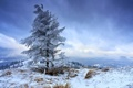 Картинка зима, небо, горы, природа, дерево, одинокое, на морозе