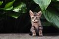 Картинка листья, кот, котенок, растения, полосатый, кошка
