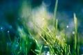 Картинка травка, капли, роса, растения, зелень, макро