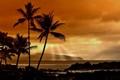 Картинка лучи, пальмы, океан