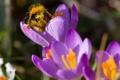 Картинка цветы, пчела, пыльца