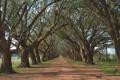 Картинка весна, ветки, Аллея, деревья, дорога, ветви, природа