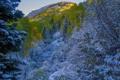 Картинка осень, лес, небо, снег, деревья, горы