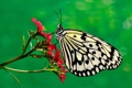 Картинка цветок, бабочка, растение, мотылек