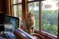 Картинка фон, дом, кошка