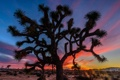 Картинка Joshua Trees National Park, облака, Калифорния, зарево, горы, США, дерево