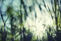 Картинка небо, трава, блур