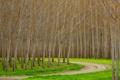 Картинка дорога, лес, трава, деревья, роща, осина