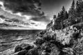 Картинка деревья, пейзаж, океан, скалы, маяк, черно-белое фото