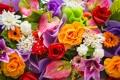 Картинка хризантемы, розы, цветы