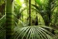 Картинка зелень, бамбук, джунгли