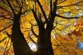 Картинка листья, осень, небо, солнце, лучи, дерево
