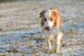 Картинка зима, поле, друг, собака
