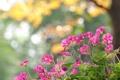 Картинка блики, клумба, розовые, цветы
