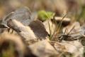 Картинка трава, макро, травинка, сухие листья