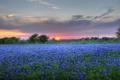 Картинка трава, солнце, цветы, тучи, природа, луг, grass
