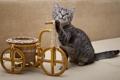 Картинка котёнок, тачка, колёса