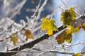 Картинка холод, иней, листья, снежинки, дерево