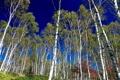 Картинка лес, деревья, березы, роща
