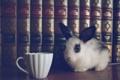 Картинка книги, кролик, чашка