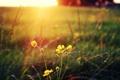 Картинка поле, солнце, макро, цветы
