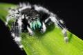 Картинка паук, лист, макро
