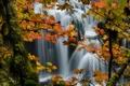 Картинка природа, лес, осень, деревья, водопад