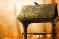 Картинка птицы, природа, птица, обои, колодец
