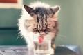 Картинка кошка, стакан, фон