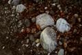 Картинка листья, макро, природа, камни, фото, обои на рабочий стол
