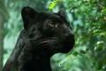 Картинка листва, дикая кошка, черная пантера