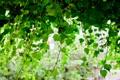 Картинка лес, листья, природа, green, обои, wallpaper, wall