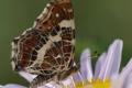 Картинка цветок, бабочка, крылья, лепестки, насекомое, мотылек