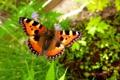 Картинка растения, Бабочка, летит