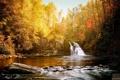 Картинка лес, река, Aaron Woodall, солнце, photographer, умиротворение, водопад