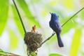 Картинка гнездо, птица, птенец, ветки