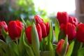 Картинка красные, тюльпаны, цветы
