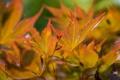 Картинка осень, листья, макро, ветка