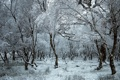 Картинка природа, лес, зима