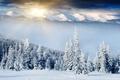 Картинка лес, солнце, зима, снег, сопки, ёлки