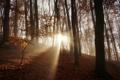 Картинка осень, лес, утро